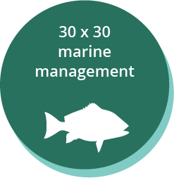 30x30 marine management