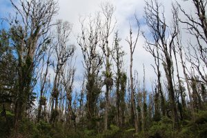 Gov. Ige has made biosecurity and fighting against invasives such as rapid 'ohia death one of his top priorities for the state.