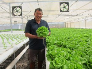 Mari's Garden owner Fred Lau in one of his greenhouses holding greens.