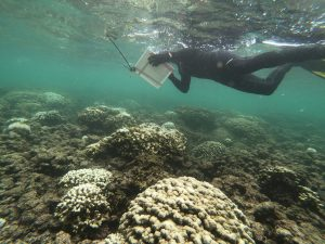 The state has initiated the Coral Pledge to prevent further damage to this fragile ecosystem.