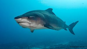 The governor signed bills to protect marine resources, including protection of sharks (with some exemptions).